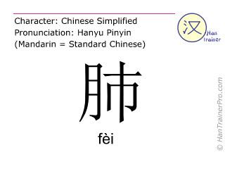 汉字  ( fei / fèi ) 包括发音 (英文翻译: lung )