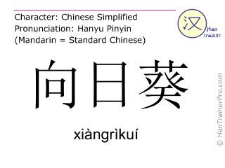 Chinesische Schriftzeichen  ( xiangrikui / xiàngrìkuí ) mit Aussprache (Deutsche Bedeutung: Sonnenblume )